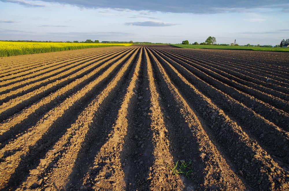 Resultado de imagem para Agronegócio do Brasil, China e da Europa
